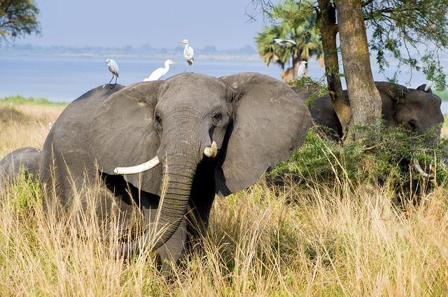 Oplevelser fra Uganda